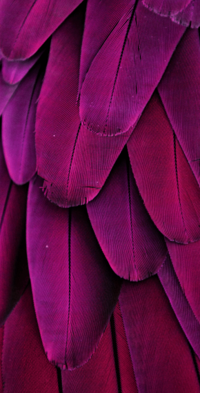 Purple Feather Touch Business Solutions