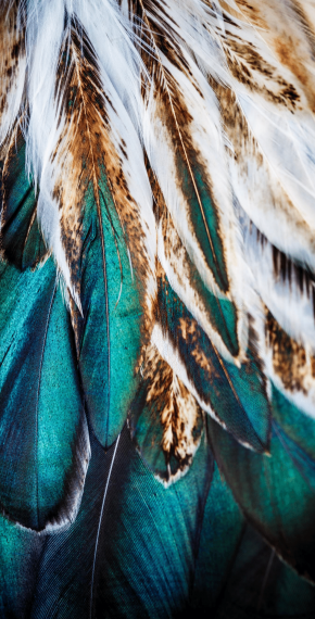 Peacock Green Feathers