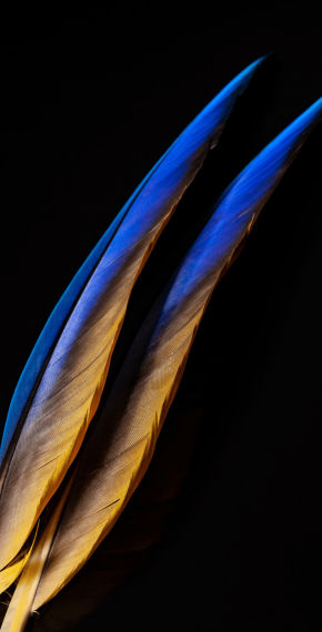 Feather Touchs