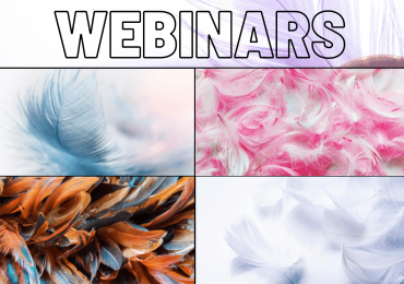 Webinars - Feather Touch