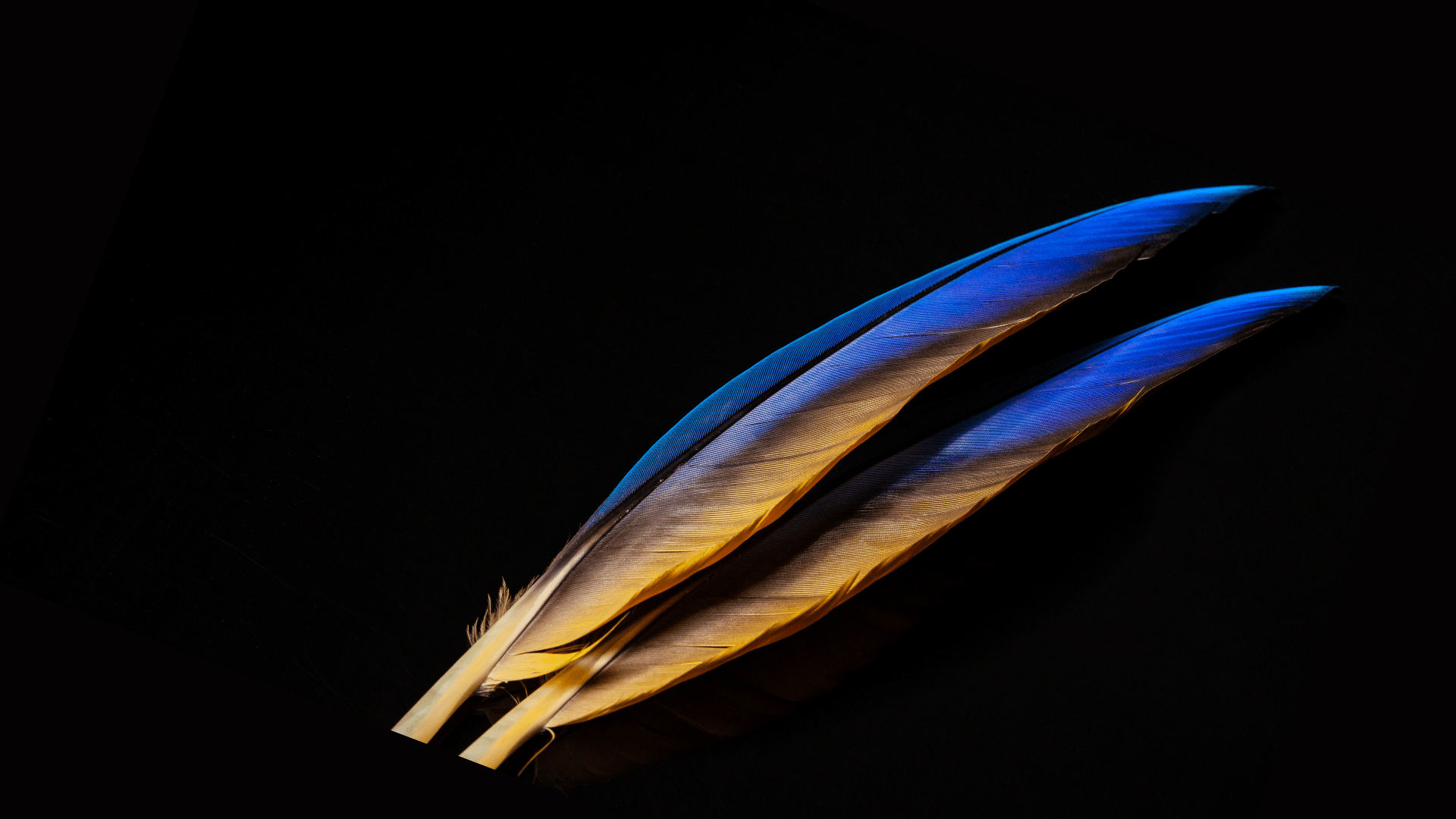 Feather Awards - Feather Touch
